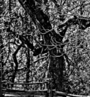 L'arbre dansant